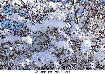 snö, på, den, grenverk