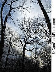 snö, träd, in, den, skog