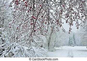 snöfall, in, stad, park-, vinter, bakgrund
