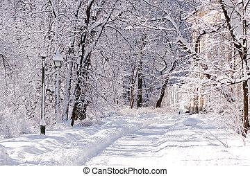 snöig, parkera, warszawa