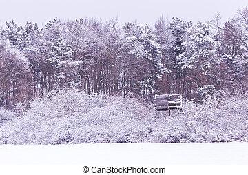 sněžný, les, zima