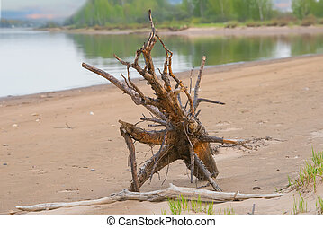 Snag on the river shore. Beautiful nature composition. Dry tree