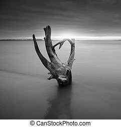 Snag on the shore. Beautiful monochrome nature composition.