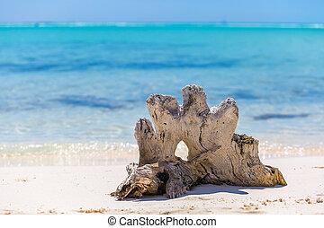 Snag on the tropical beach