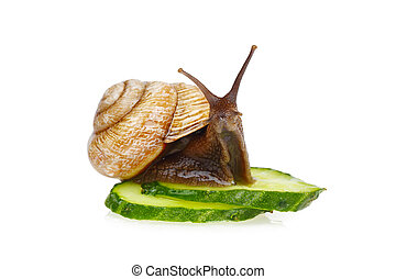 Snail and cucumber