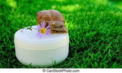 snail and flower, skin care, mucin cream. High quality 4k footage