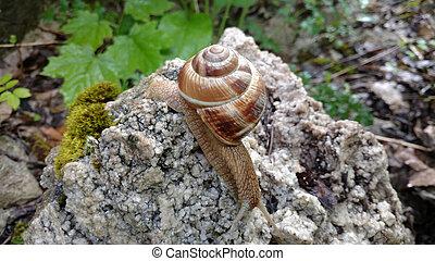 snail basks in the sun