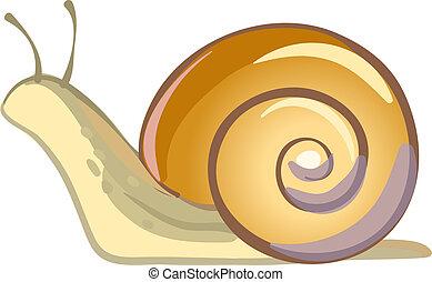 Snail vector illustration