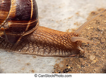 snail close up in the garden