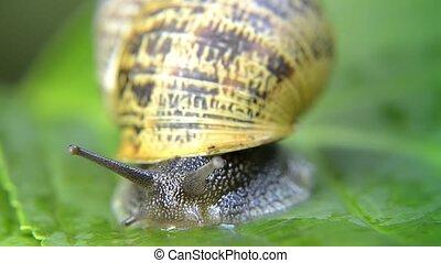 snail, close up - snail macro shot