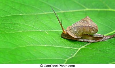 """Snail Crawling across a Leaf, Trailin Slime"" - ""Snail, with..."