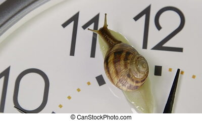 Snail crawling across face of clock