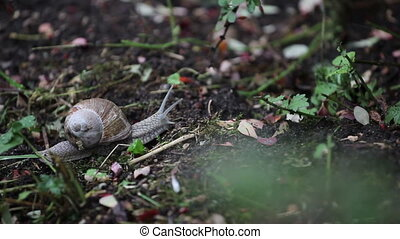 Snail crawling in nature