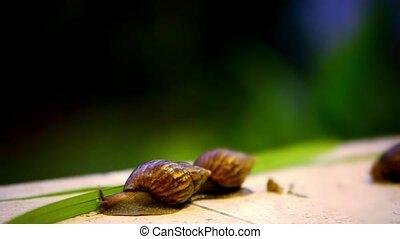 Snail crawling. Macro video shift motion 1920*1080