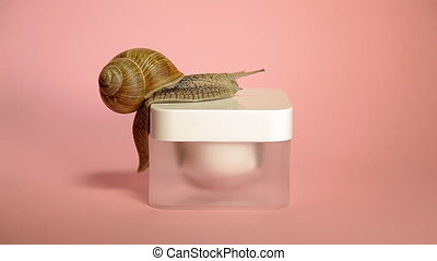 Snail crawling on a jar of cream. Snail and cosmetics on a...
