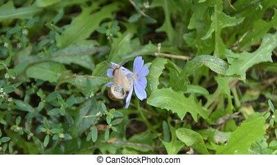 Snail crawling on a purple flower