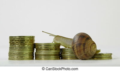 Snail crawling on a schedule of coins  time-lapse