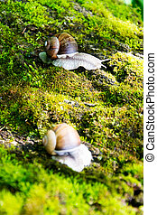 Snail crawling on moss in garden