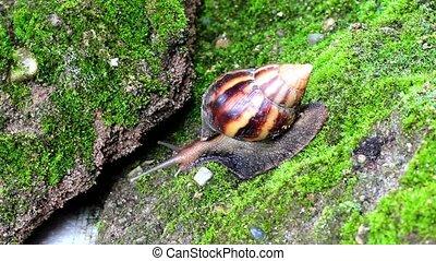 snail crawling on soil