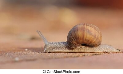 Snail crawling on the ground - Snail crawling on the...