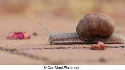Snail crawling on the ground - Snail crawling slowly on the ...
