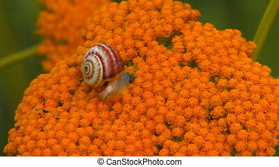 Snail crawling on yellow flower