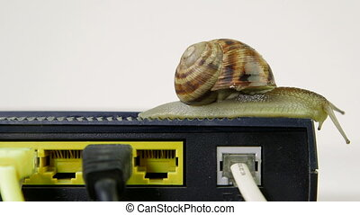Snail crawling slowly across router network hub with patch...