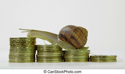Snail crawling up a stack of coins