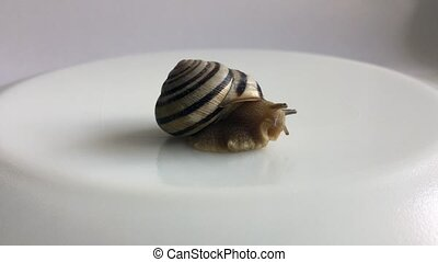 Snail crawls out of its shell on a white background