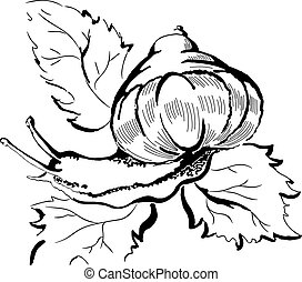Snail - Creative design of snail crawling on leaves