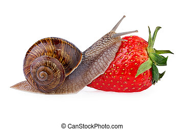 snail creeping on ripe red berry strawberry - Garden snail...