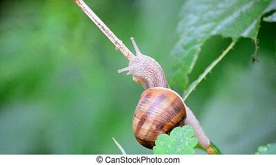 snail eating