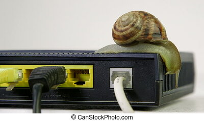 Snail exploring wireless router