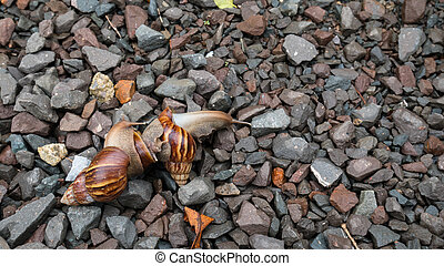 Snail family wark in the garden with sun light
