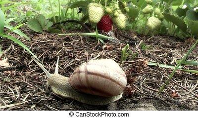 Snail,