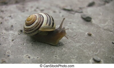 Snail gets visit from mosquito. - Snail. Mosquito climbs...
