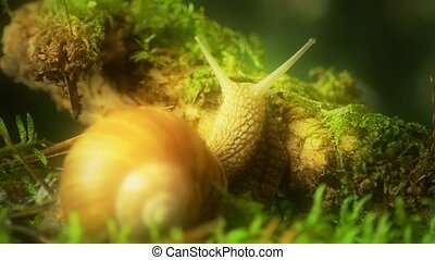 Snail. Grape snail in the natural habitat 44