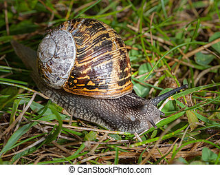 Snail in a green meadow, Normandy France