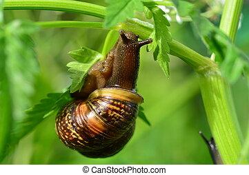 Snail in green summer grass in the light of morning sunlight