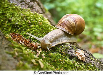 Snail in moss