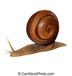 Snail is a common name that is applied most often to land snails, terrestrial pulmonate gastropod molluscs.
