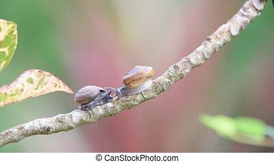 Snail is a invertebrates animal wildlife on plant - Snail is...
