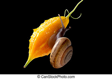 Snail isolated on black background