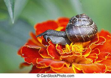 snail macro