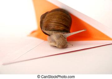 Snail Mail Closeup