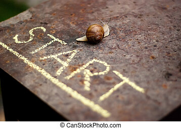 snail moving from the start