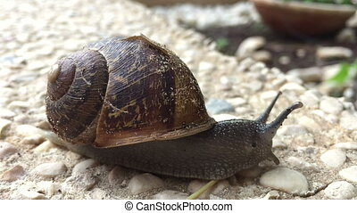 snail moving slow