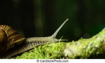 snail., natuurlijke , habitat, slak, 45., druif