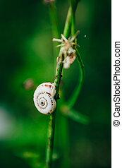 snail on a a blade of grass