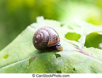 snail on a leaf